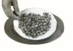 kacang-kapri001
