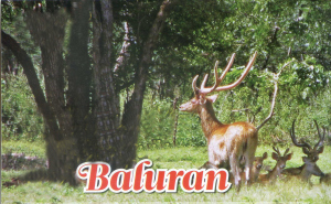 Taman Nasional Baluran'