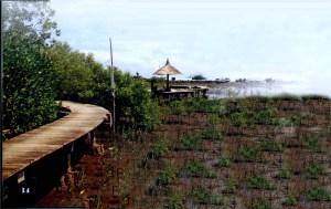 wisata-mangrove-kota-probolinggo0007
