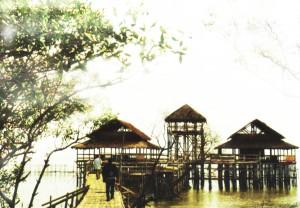 Ekowisata Mangrove Wonorejo (2)